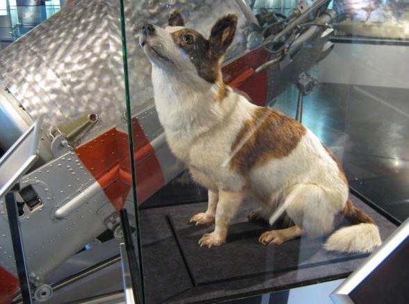 Kollegaen Strelka - evigt ventende på en godbid