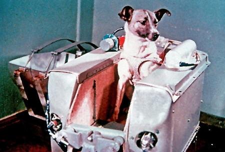 Den glorværdige rumhund Laika