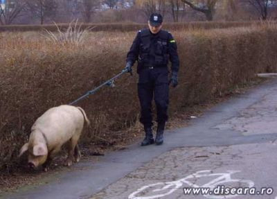 police_pig