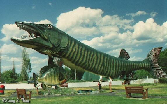 Verdens største fisk